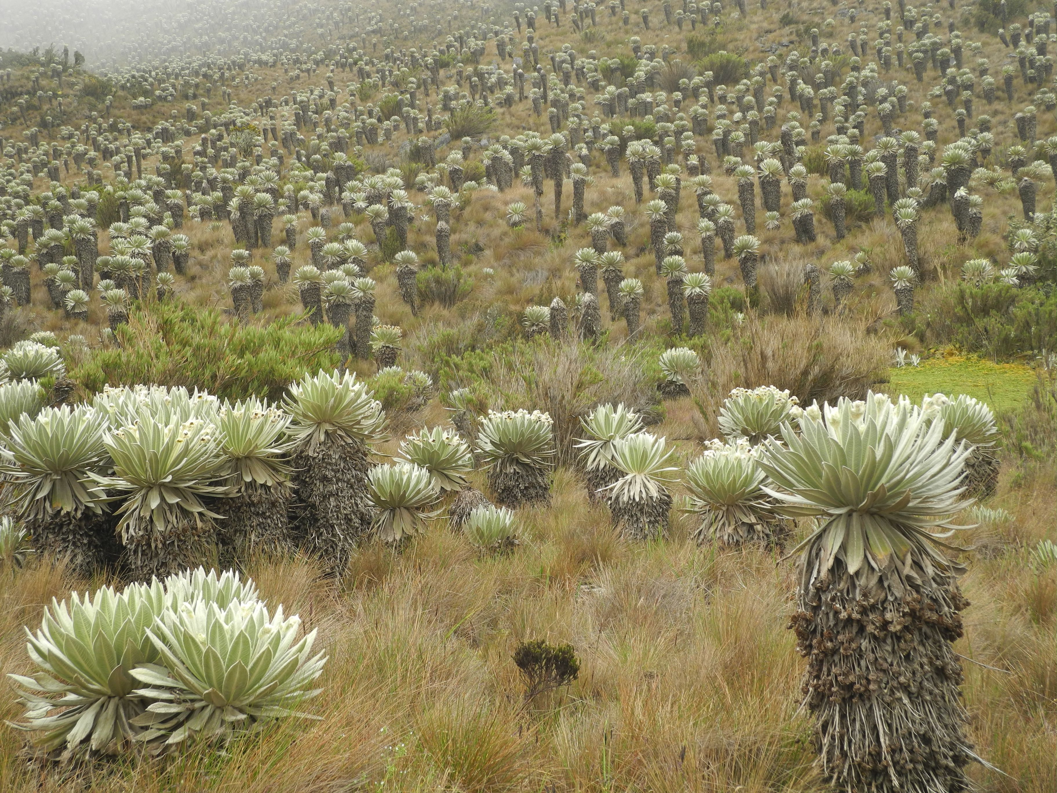 La nature bizarre : Guadalupe et le paramo