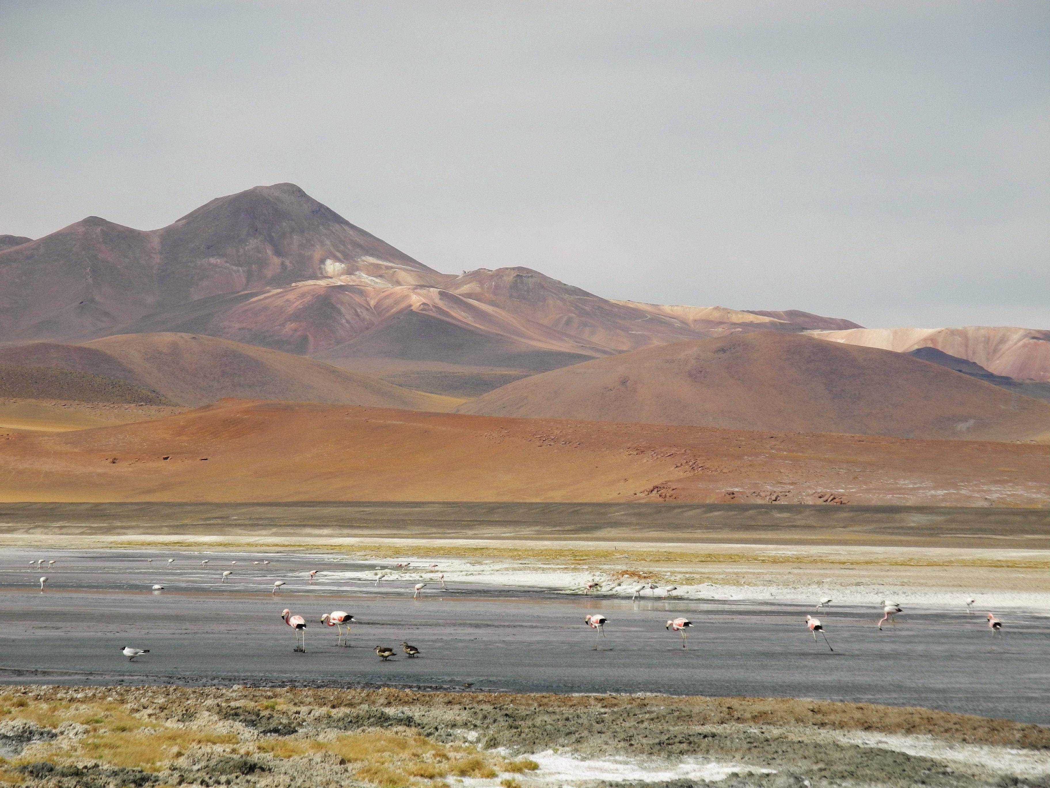 Chili : on fait le bilan !