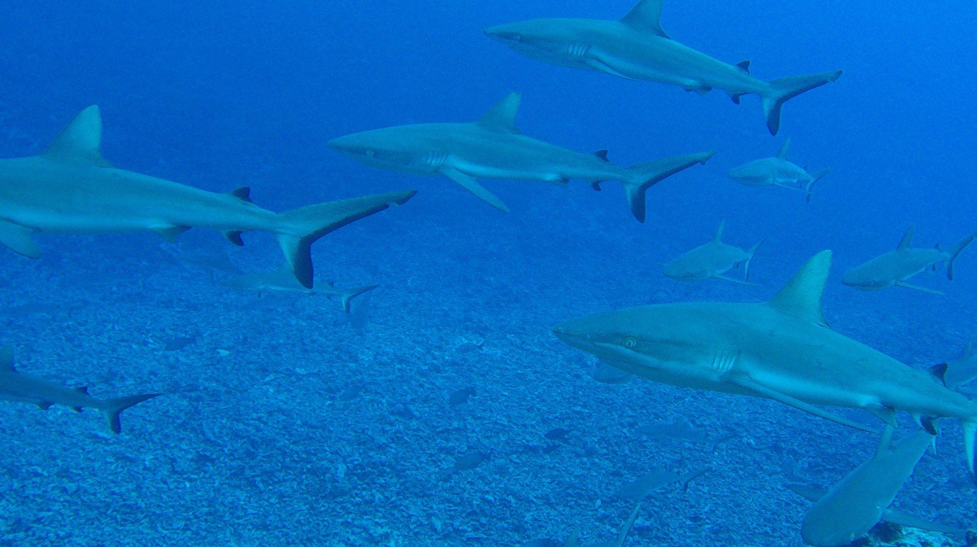 Aventures subaquatiques dans les Tuamotu