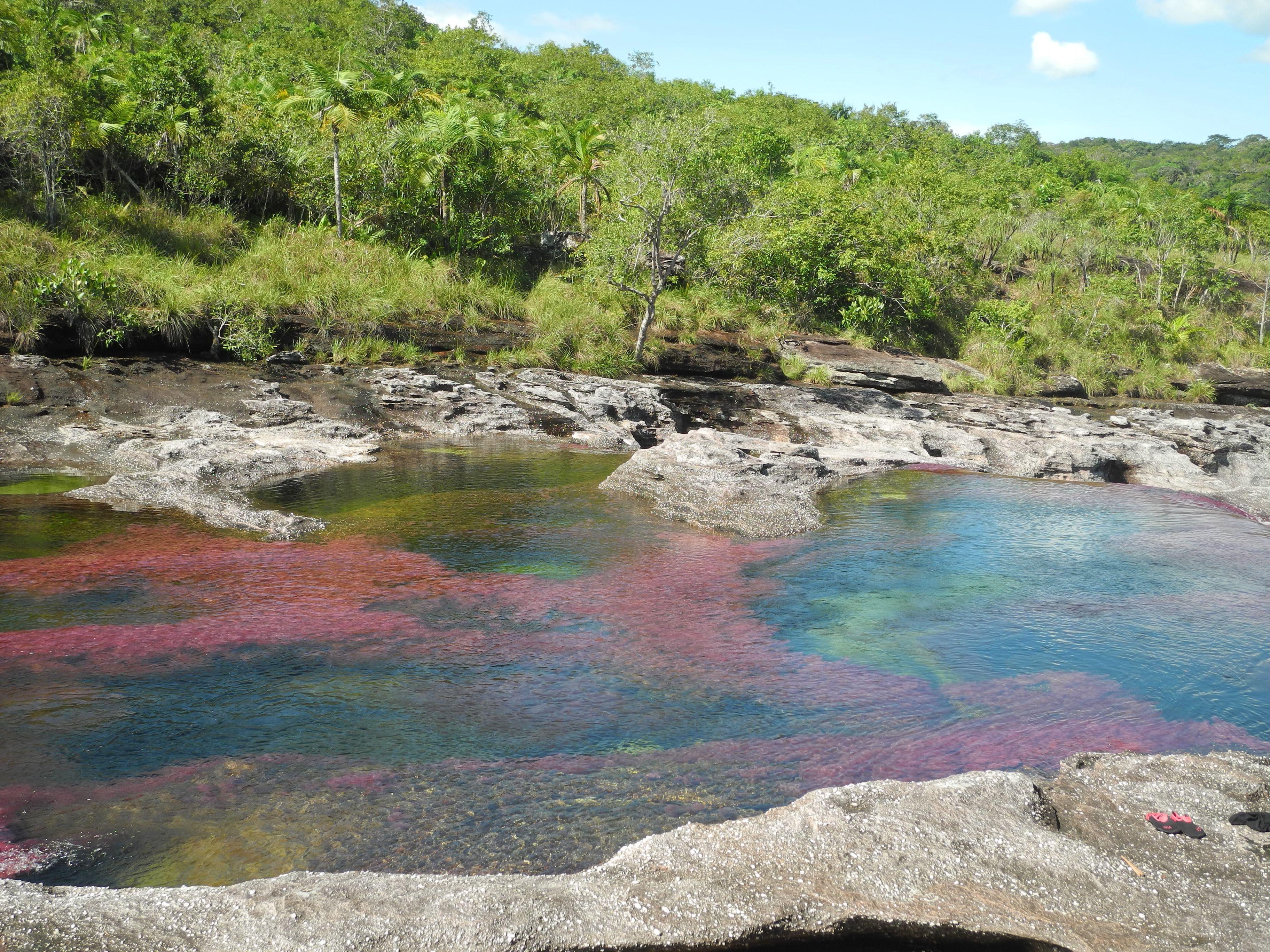 Caño Cristales, la rivière arc-en-ciel #nofilter