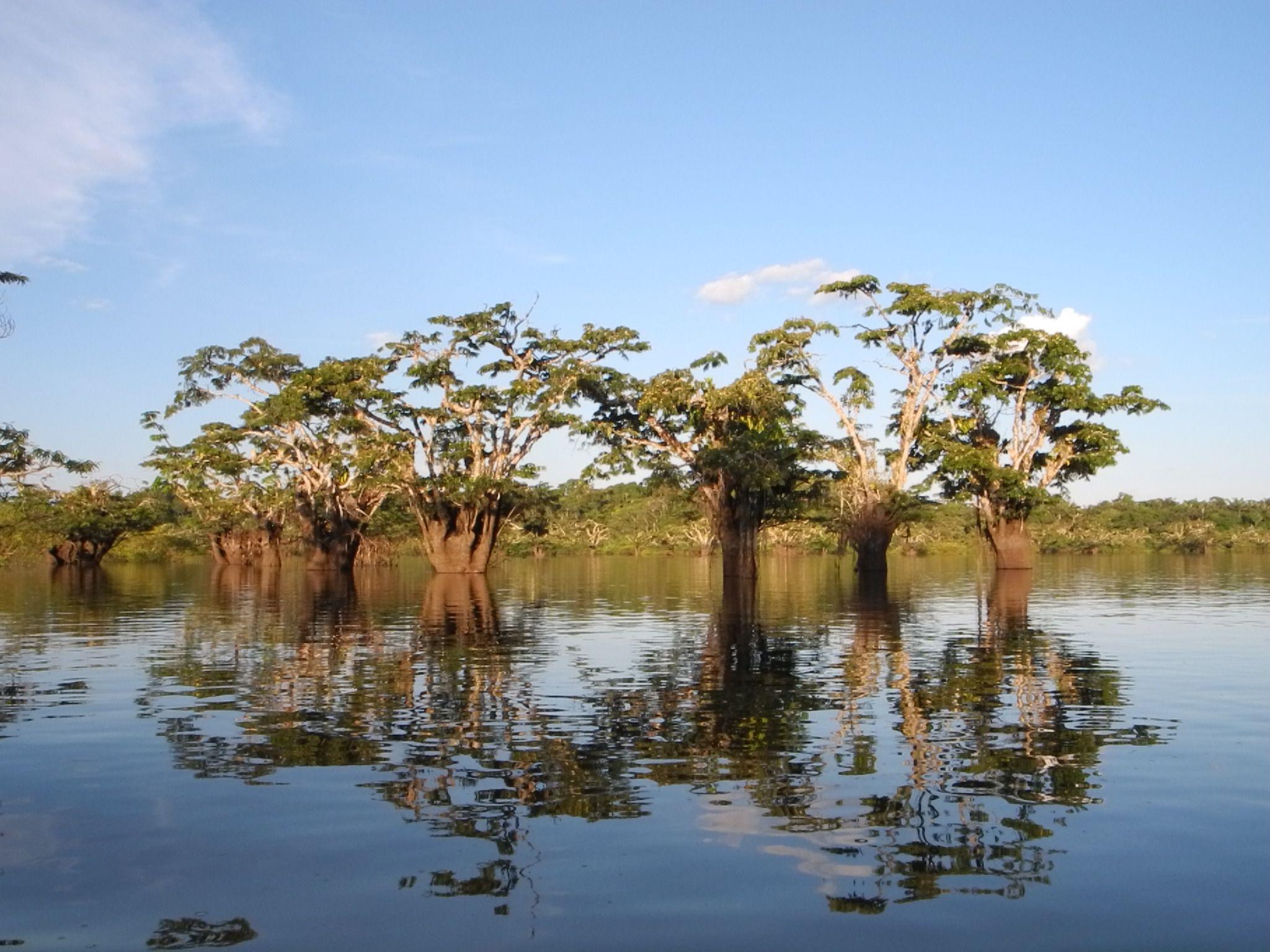 De la jungle urbaine à l'Amazonie !